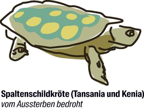 Vorschlag von Kenia und den USA: der Artenschutz soll strenger werden.Weil sie so flach ist, kann sich die Spaltenschildkröte in engen Felsspalten gut vor Feinden verstecken. Trotzdem ist sie in freier Wildbahn selten geworden, denn die Zersplitterung ihres Lebensraumes macht ihr zu schaffen.