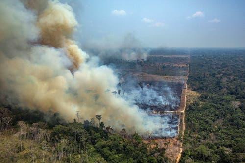 Insgesamt wurden mehr als 79'000 Brände registriert. (Bild: Victor Moriyama / Greenpeace Bra)