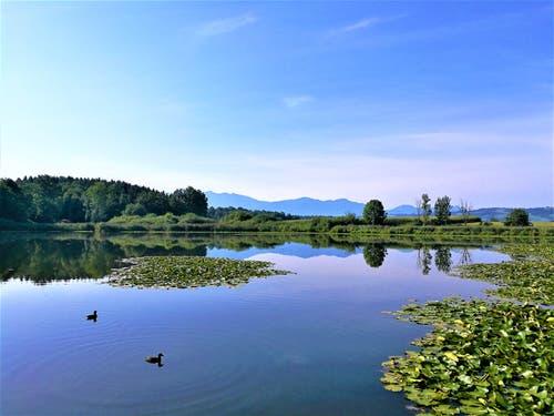 Herrliches Spätsommerwetter am Steinibühlweiher. Auch die beiden Enten geniessen das wunderbare Wetter. (Bild: Urs Gutfleisch, Sempach, 27. August 2019)