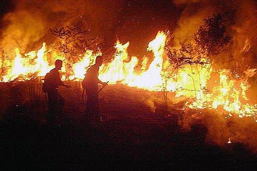 Nach Einschätzung von Naturschützern werden die meisten Brände von Farmern gelegt, um neue Weideflächen für ihr Vieh zu schaffen. (Bild: Firefighters Acre HANDOUT)