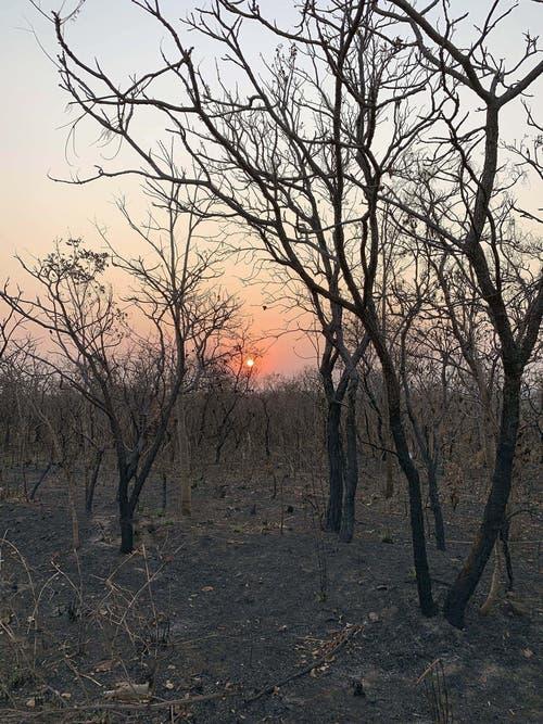 Wo einst prächtige Bäume standen, finden sich heute nur noch Ruinen. (Bild: Keystone)