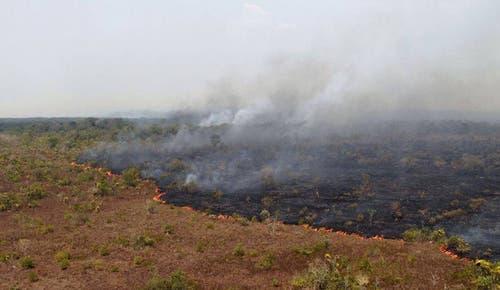 Immer wieder verursachen Rodungen Waldbrände. (Bild: Keystone/Twitter/Ibama)