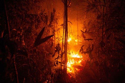 Seit Januar nahm die Zahl der Feuer und Brandrodungen im grössten Land Südamerikas im Vergleich zum Vorjahreszeitraum nach Angaben der brasilianischen Weltraumagentur INPE vom Sonntag um 82 Prozent zu. (Bild: Joedson Alves)