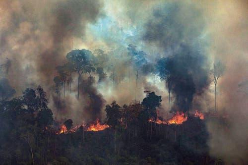 In Brasilien wüten derzeit die schwersten Waldbrände seit Jahren. (Bild: Victor Moriyama / Greenpeace Bra)
