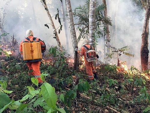 Die Löscharbeiten gestalten sich schwierig. (Bild: Porto Velho Firefighters HANDOUT)