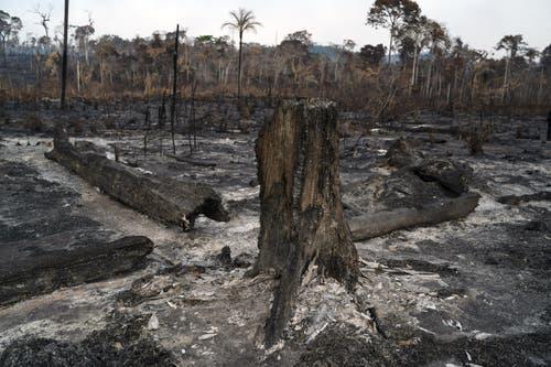 Von der blühenden Vegetation ist vielerorts nicht mehr viel übrig. (Bild: Leo Correa)