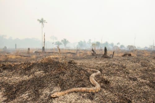 Eine Schlange flüchtet vor dem Feuer. (Bild: Joedson Alves)