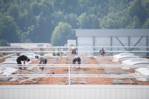 22 000 Quadratmeter des Daches werden begrünt und mit rund 6000 Quadratmetern Solarpanels bestückt.(Bild: Urs Bucher)