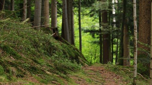 Gehen über den weichen Waldboden (Bild: Irene Wanner, Willisau, 28. August 2019)