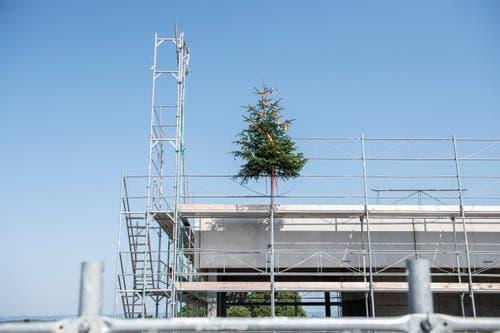 Das Aufrichtebäumchen auf dem Dach des Verwaltungsgebäudes. (Bild: Urs Bucher)