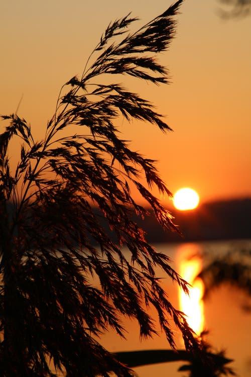 Niemand kann einen Sonnenuntergang besitzen, so beginnt ein Gedicht von Paulo Coelho, aber ein Jeder kann den Sonnenuntergang beobachten. (Bild: Irene Wanner, Sempach, 29. August 2019)
