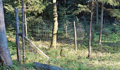 Der Zaun, der junge Bäume im Nieselberger Wald schützt, kann zur Falle werden.
