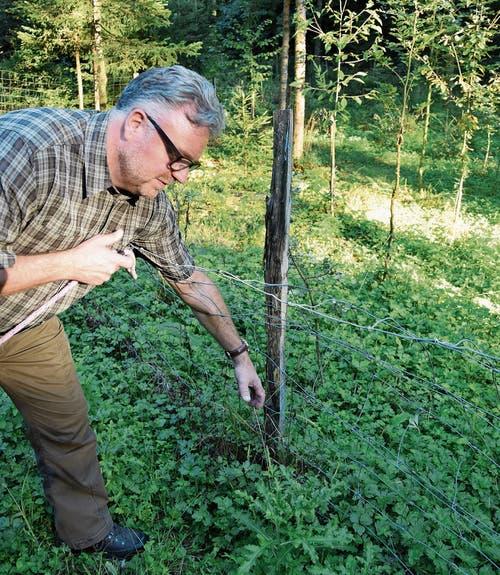Jäger Harry Flückiger ist besorgt, dass sich ein Tier in diesem Zaun verfangen könnte. (Bilder: Lara Wüest)