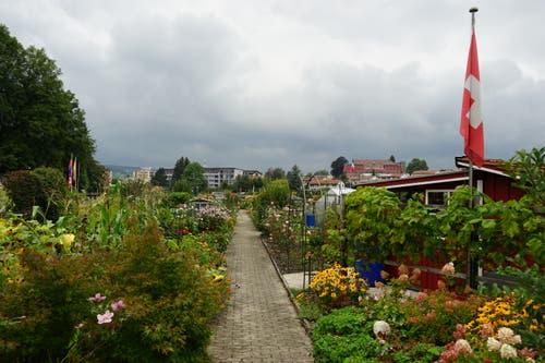 ...doch schon wenige Meter dahinter wird es grün. Im Bild sind die Familiengärten. Ein Idyll.