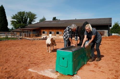 Die Pferde und Ponys seien immer noch sehr gesellig und mehr entspannt, betonen Claudia und Stefan Knüsel. (Bild: Stefan Kaiser, Cham, 10. September 2019)