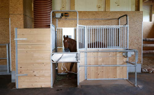 Die Futterautomaten bieten jeweils nur für ein Pferd Platz. Die anderen müssen warten. Das vermeidet Futterneid. (Bild: Stefan Kaiser, Cham, 10. September 2019)