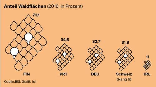 Wie hoch ist der Anteil an Waldflächen in der Schweiz im Vergleich? (Bild: Lea Siegwart)