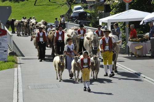 Ausser Programm und doch viel beachtet: Alpabzug in St.Peterzell. (Bild: Urs Nobel)
