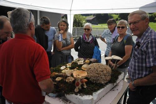 Die Pilzausstellung in St.Peterzell gab Anlass zu vielen Fragen und regen Diskussionen. (Bild: Urs Nobel)