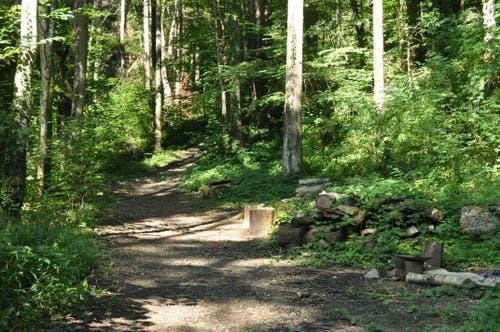 Der hoch zum St.Anton führt hauptsächlich durch Wald und über Wiesen.