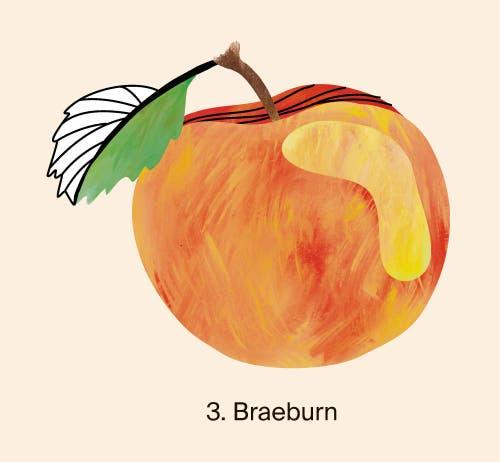 Auf dem Podest landeten auch Braeburn-Äpfel mit 15 929 geernteten Tonnen. Auf dem vierten Platz lag 2018 die Sorte Jonagold mit 9827 Tonnen vor Boskoop mit 7152 Tonnen. Quelle: Naturmuseum St. Gallen