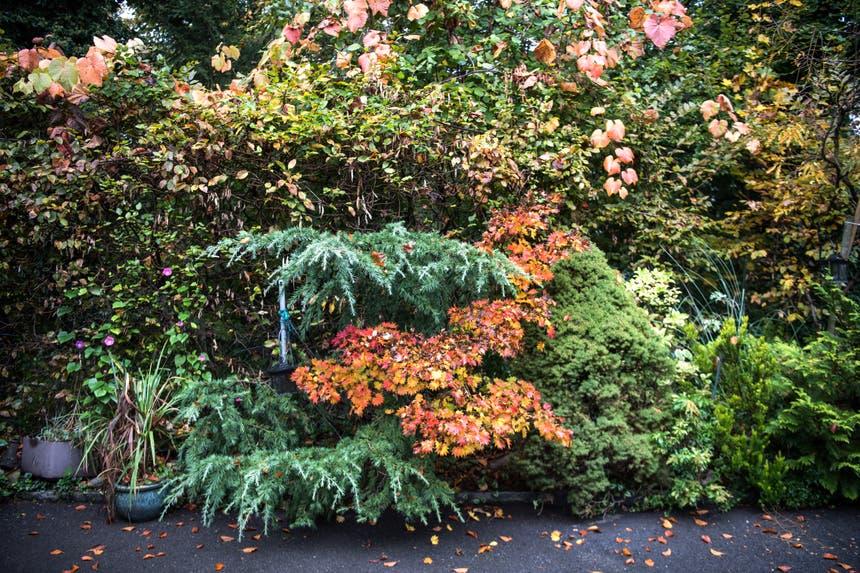 Impressionen aus dem Garten von Retha Scherrer. (Bild: Pius Amrein, Ebikon, 22. Oktober 2019)